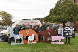 wooden animal figures for animal safety campaign in the New Forest
